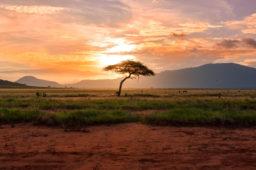 VOYAGE DE FAMILIARISATION AU KENYA